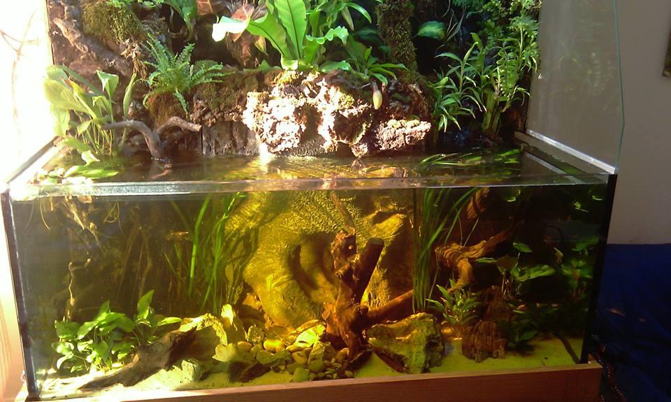 Il mio paludario terraria for Acquario aperto