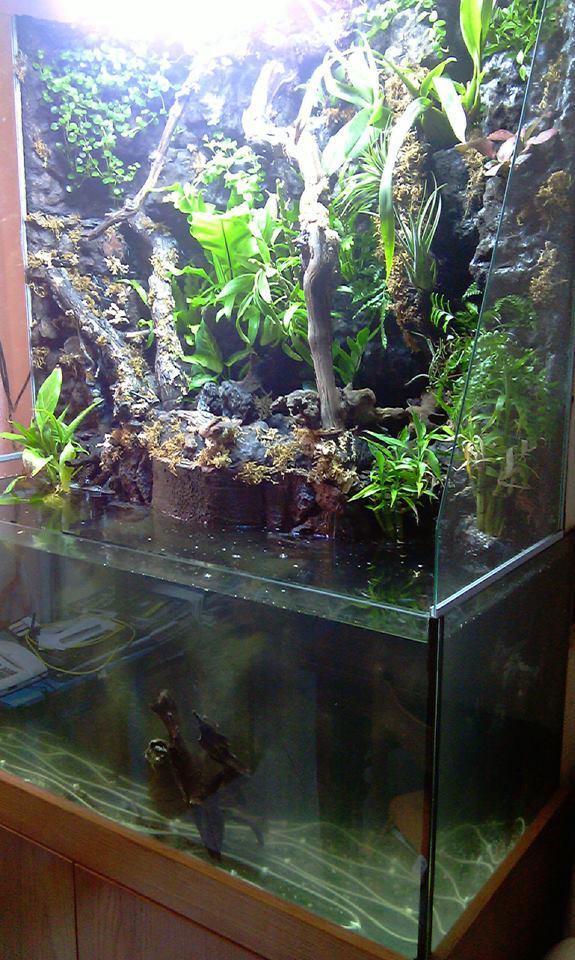 Il mio paludario terraria for Legni per acquario