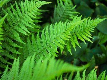LA FORESTA TROPICALE E L'UOMO: MEDICINALI DALLA FORESTA