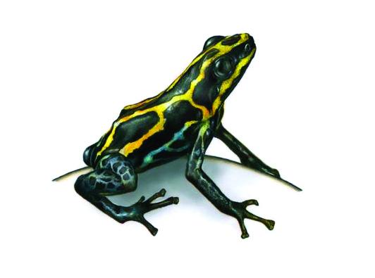 Frog-edit-2