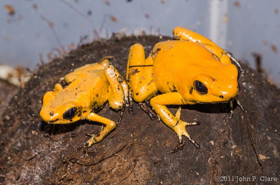 Orange Terribilis - April 17th 2012-3508