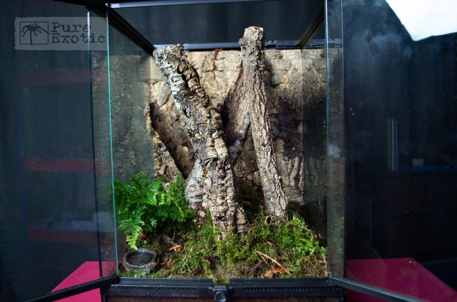 Terrarium-for-Cyriopagopus-schioedtei