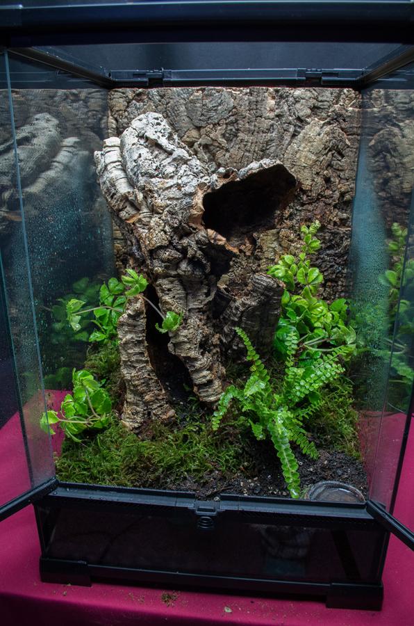 Terrarium-for-Poecilotheria-subfusca