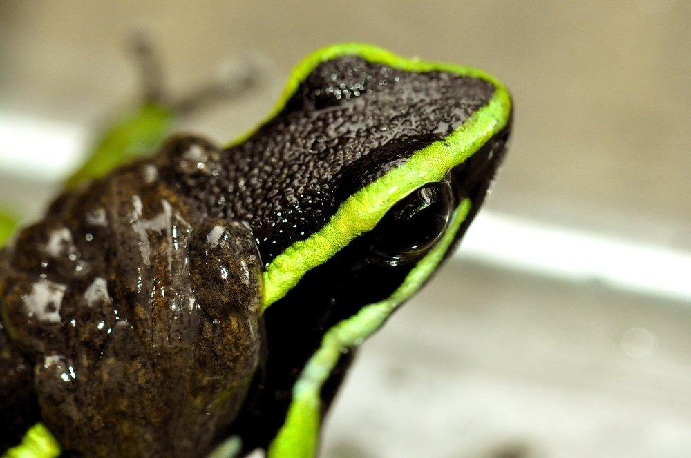 frog-close-upmodified