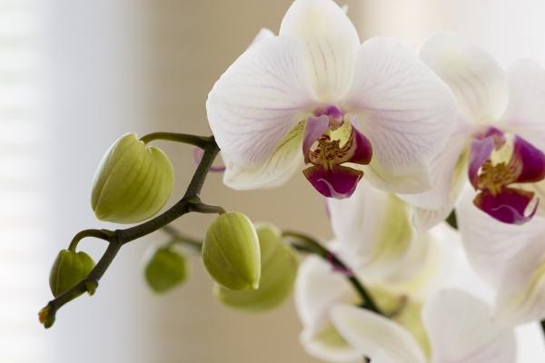 orchidee-18