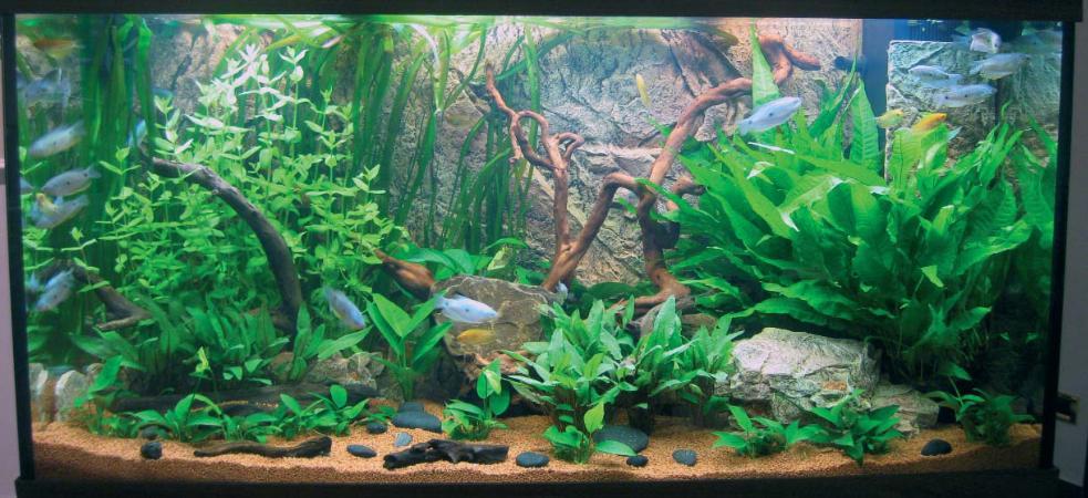 L acquario biotopo nel paludario terraria for Fondo per acquario