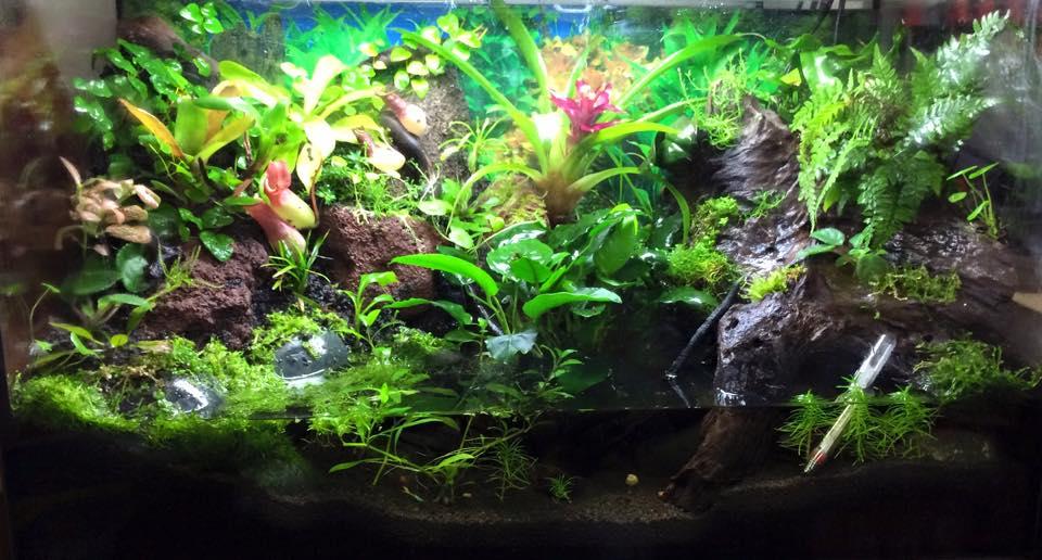 Il paludario una sintesi ideale fra acquario e terrario for Piante da acquario