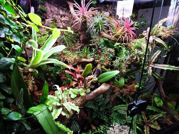 TERRARIUM (Video)