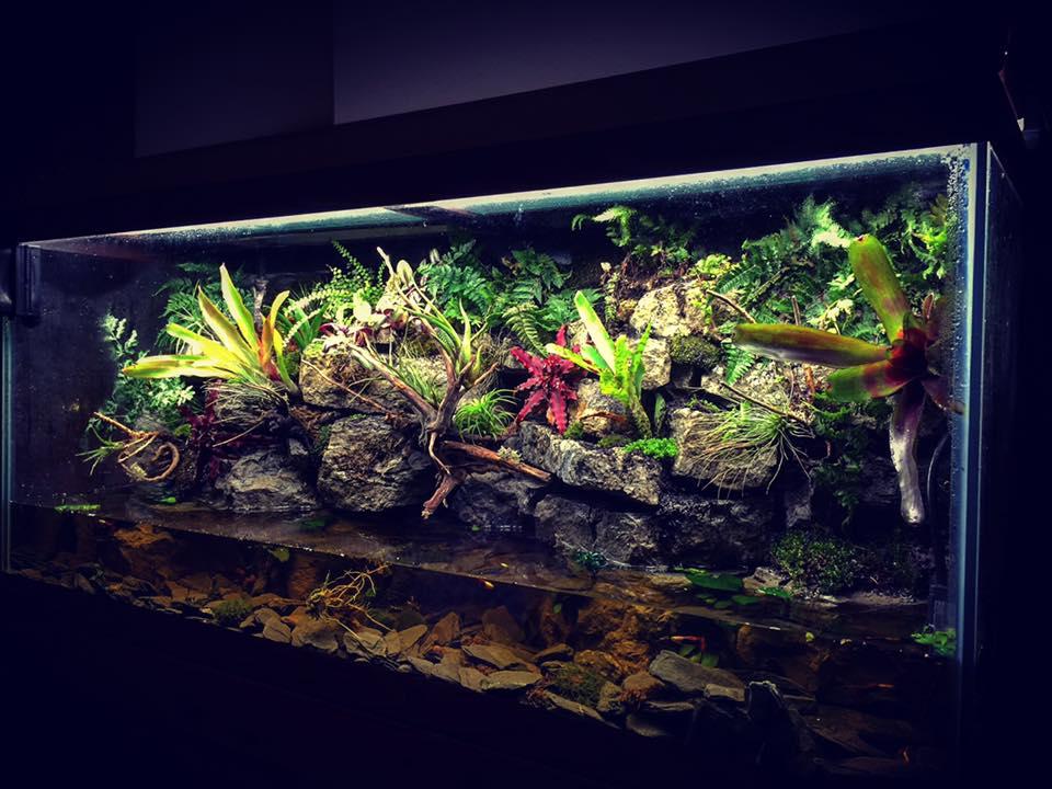 Il paludario una sintesi ideale fra acquario e terrario for Acquario da parete