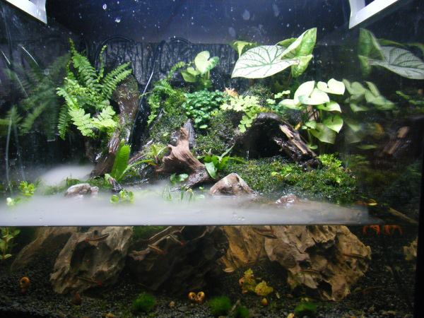 Il paludario una sintesi ideale fra acquario e terrario for Vasca per tartaruga acquatica