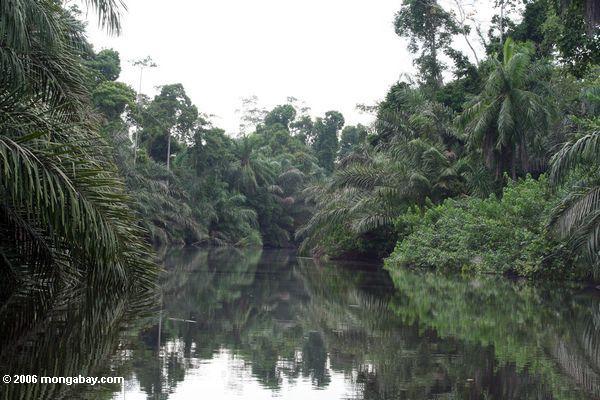 Africa, un torrente nella giungla del Gabon - Foto di Rhett A. Butler