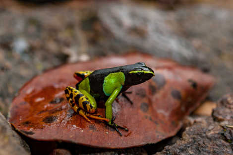 Frog Blog Manchester (c) George Sayer