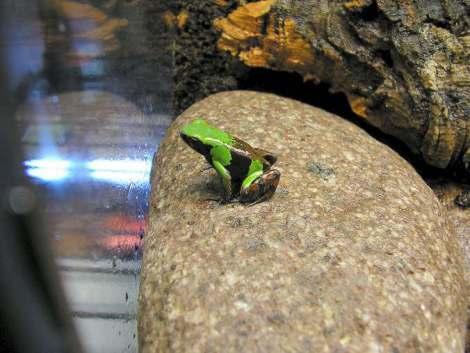 Amphibiancare.com