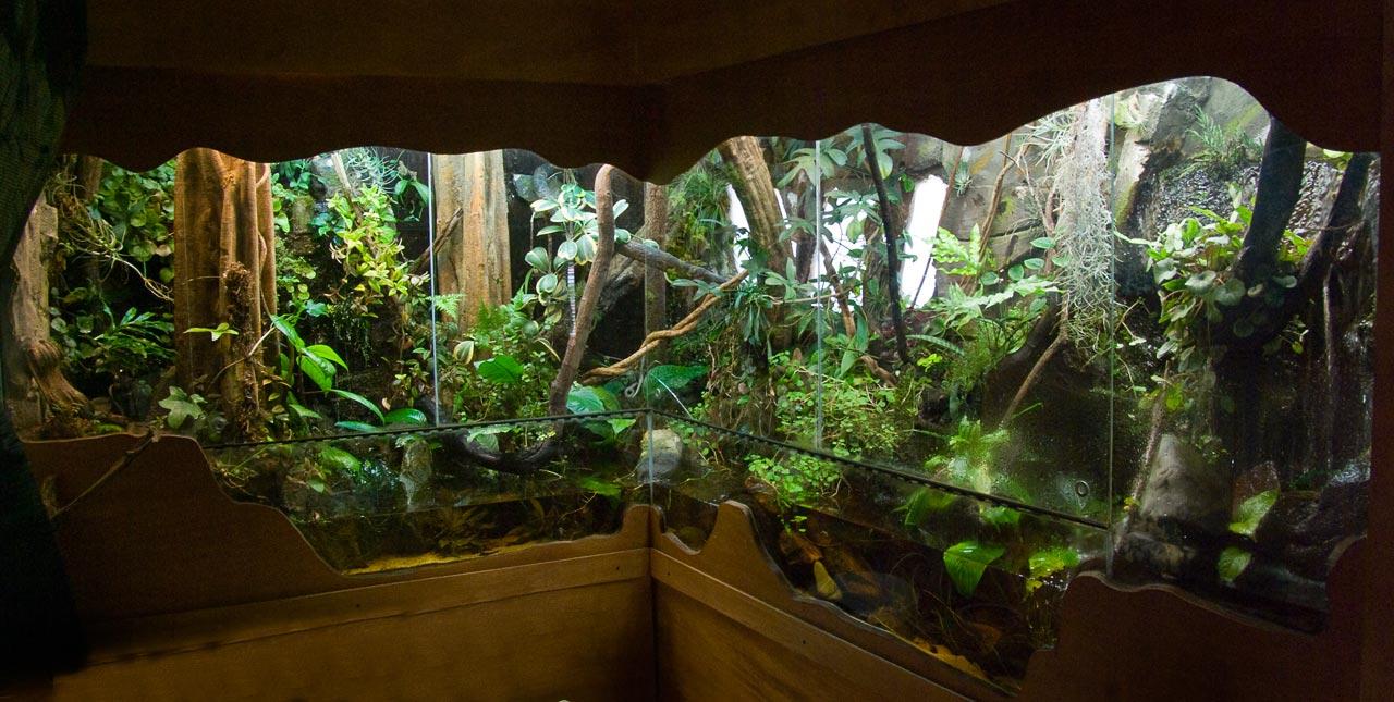 L acquario biotopo nel paludario terraria for Arredamento acquario