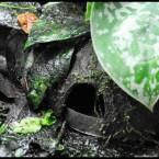 Siti di deposizione suddivisi per specie