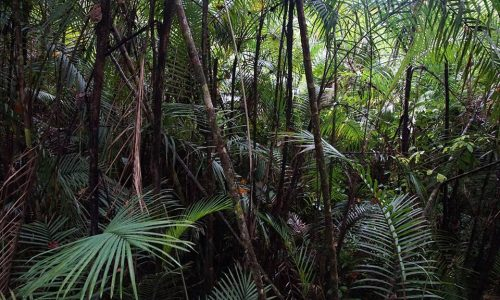 I suoni della foresta tropicale