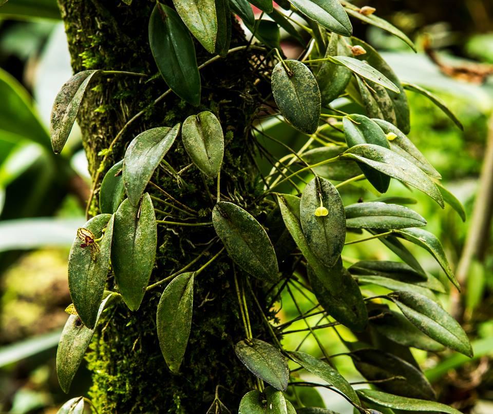 monteverde costa rica orchid garden