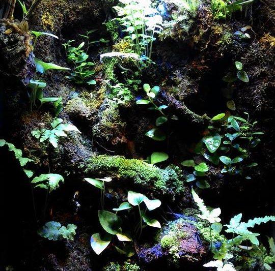 My vertical terrarium –  Don Donaldson