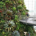 Singapore: gardens by the bay conservatories