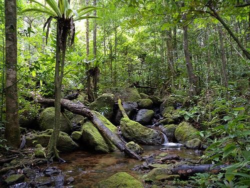 foreste-da-salvare-madagascar