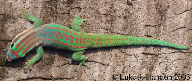 geckofleuri