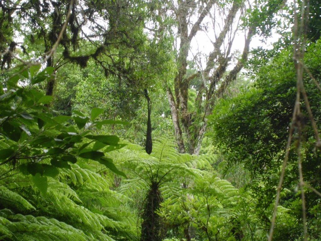 selva-paranaense