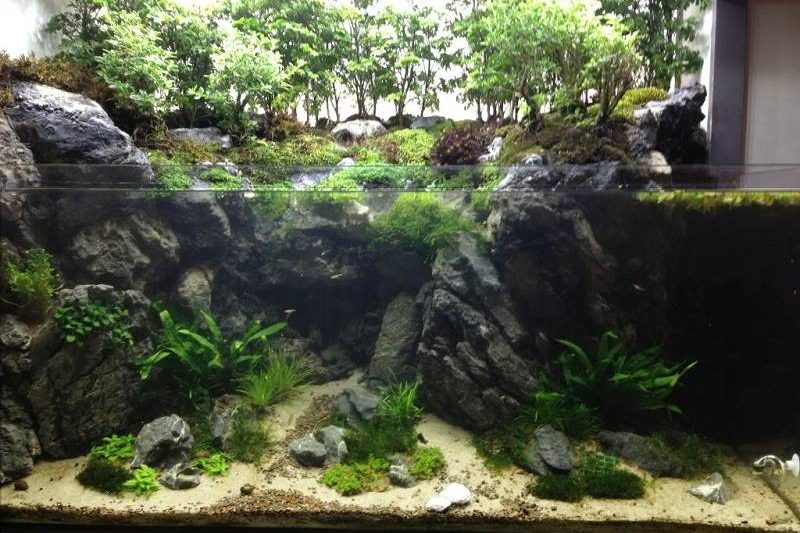 Paludarium of Yo-han – 90g Cliffside Paludarium Build.