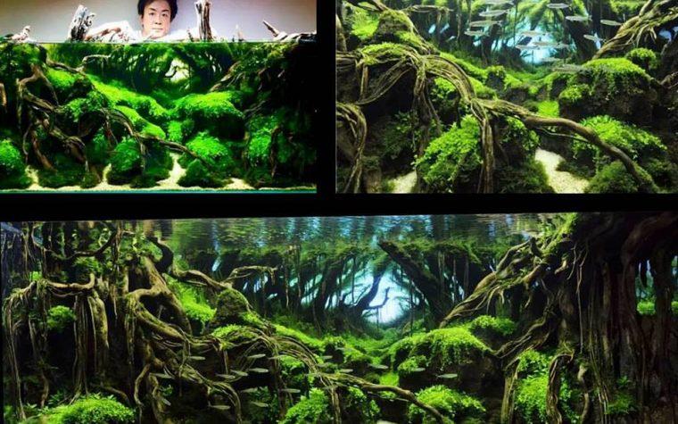 The big champion 2015 – 15th IAPLC Grand Prize Work –  Takayuki Fukada ( JAPAN)