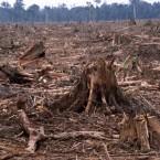 """""""L' uomo è la specie più folle: venera un Dio invisibile e distrugge una Natura visibile: Senza rendersi conto che la Natura che sta distruggendo è quel Dio che sta venerando"""" (Hubert Reeves)"""