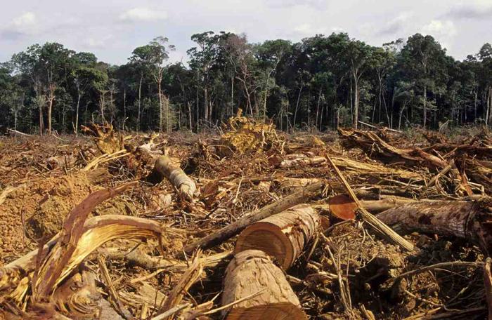 deforestazione_foresta_amazzonica