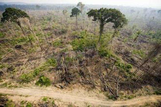 foresta-amazzonica-1107