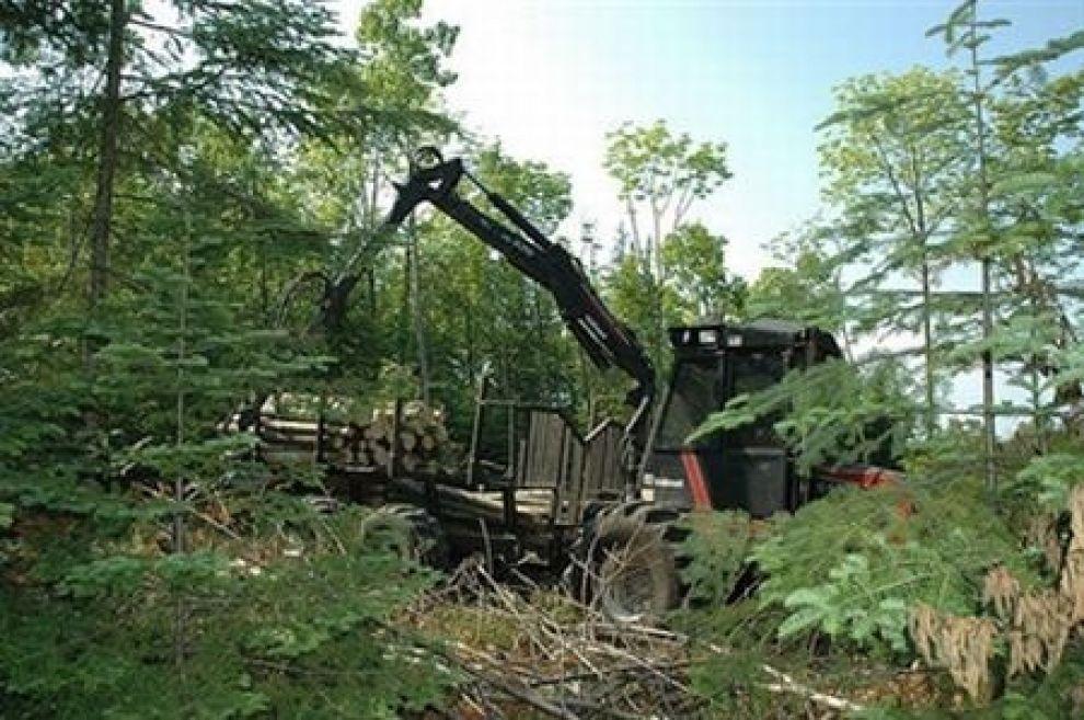 l43-deforestazione-calo-111207123740_big