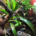 FROG ROOM (VIDEO)