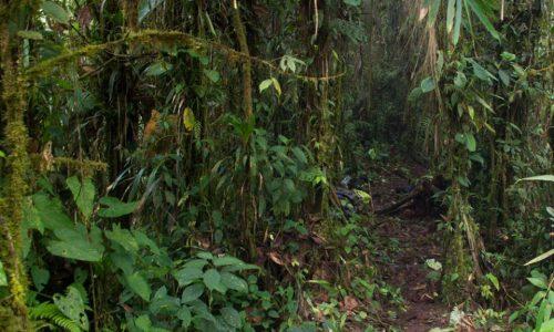FORESTA PLUVIALE – COLOMBIA