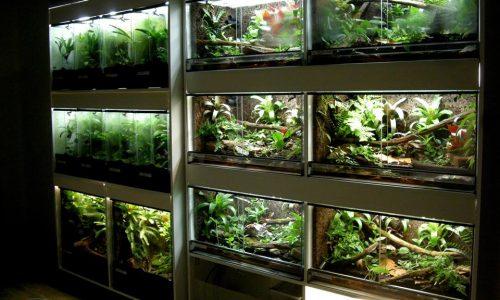 Frog Room Gallery
