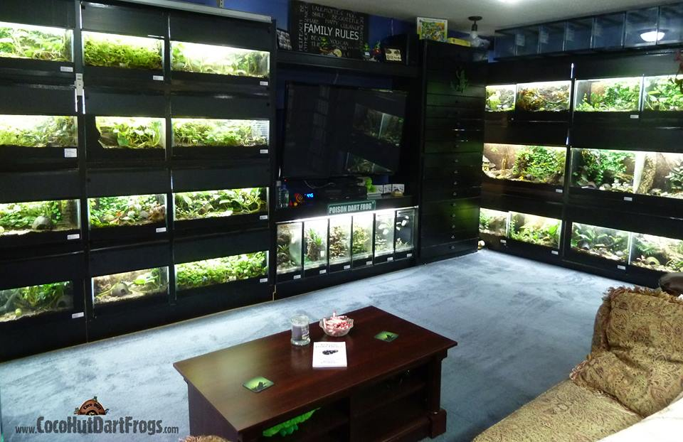chris-luces-frog-room-2