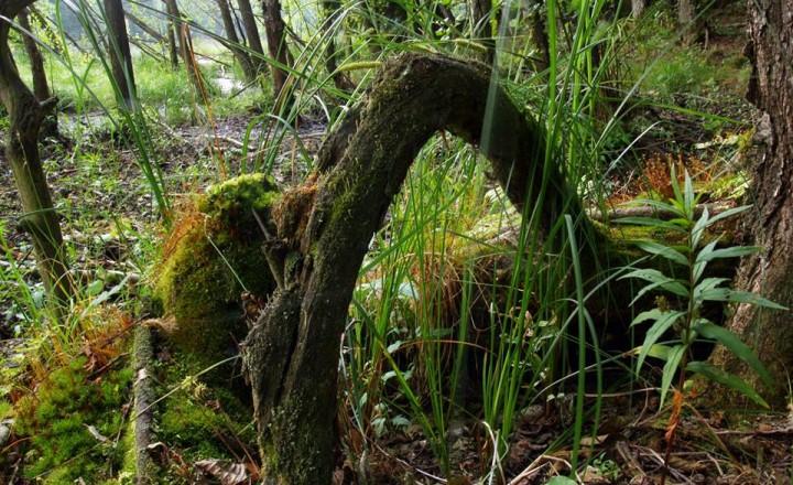 """Ispirazione per il terrario """"rain forest"""""""