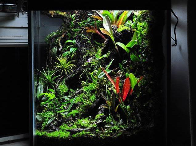 Vivarium Terrarium by Yu Rio