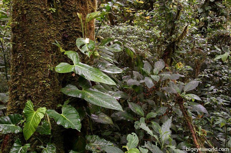 LE FORESTE TROPICALI NEL MONDO – Costa Rica – Monteverde – Bosque nuboso.