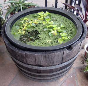 Giardino acquatico in vaso come realizzare un mini pond for Laghetto giardino zanzare
