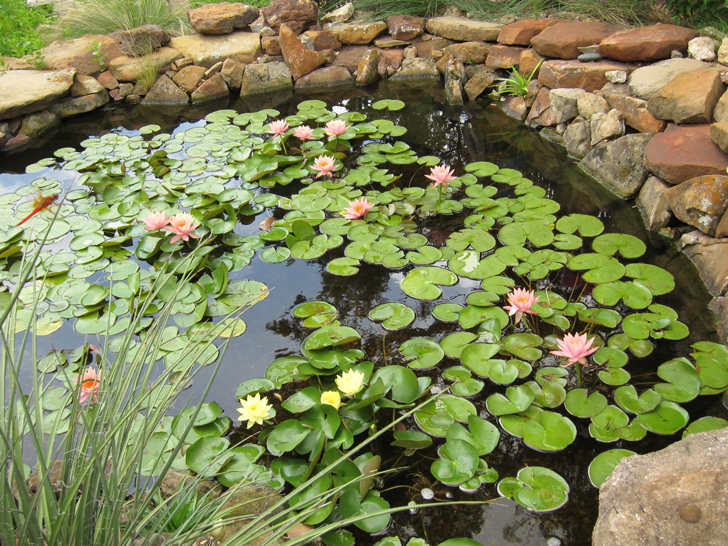 Vasche in plastica per ninfee for Vasche in plastica da giardino