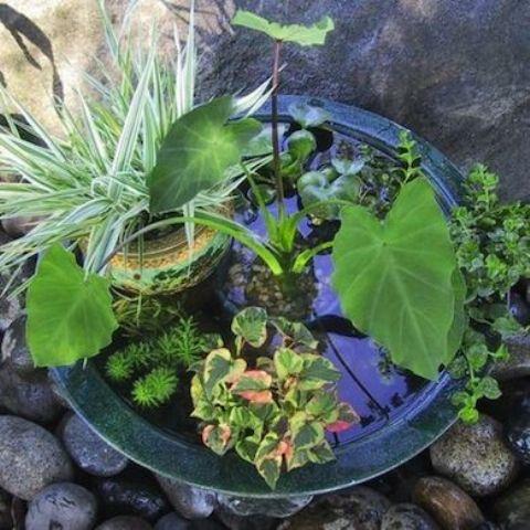 giardino acquatico in vaso come realizzare un mini pond