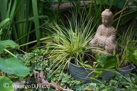 Giardino acquatico in vaso come realizzare un mini pond for Piante dello stagno