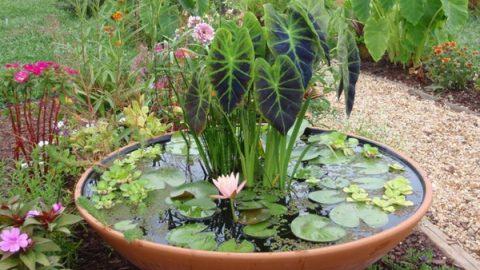 Vasche In Plastica Per Ninfee.Giardino Acquatico In Vaso Come Realizzare Un Mini Pond
