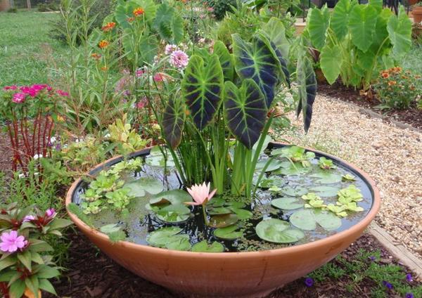 Giardino acquatico in vaso come realizzare un mini pond for Fiori acquatici