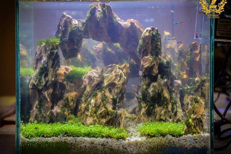 TDS Aquascape Individual Battle 2016.