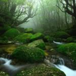 Foresta di Yakushima (Giappone) fonte di ispirazione per l'arredamento del terrario.