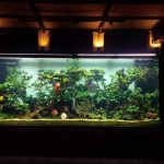 Gunawarman Project – Discus Aquarium