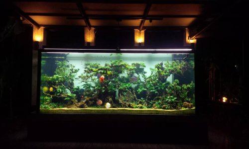 Gunawarman Project – Discus Aquarium