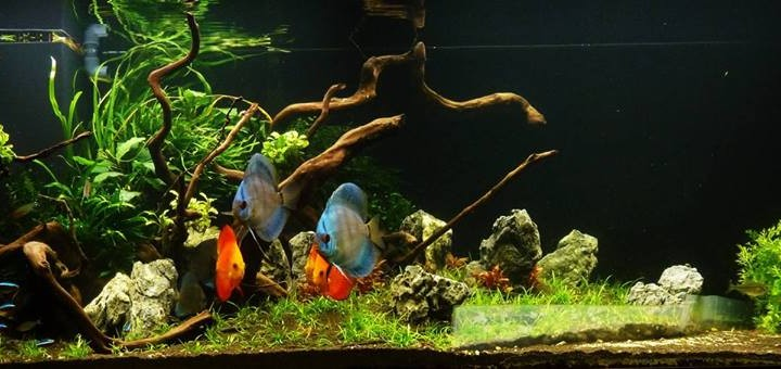Acquario d'acqua dolce tropicale – Video